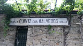 Vineriet på Malvedos