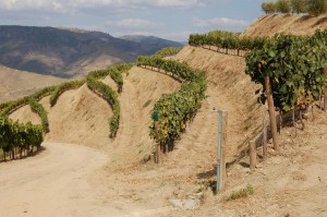På tur i Taylord Vargellas vinmarker